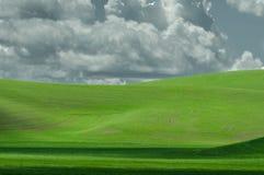 Campo verde claro del trigo nuevamente plantado Imagen de archivo libre de regalías