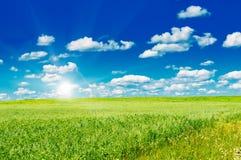 Campo verde com flores de florescência e o céu azul Fotografia de Stock Royalty Free