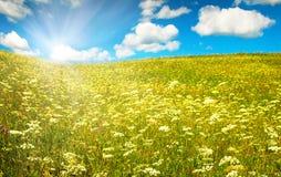 Campo verde com flores de florescência e o céu azul Foto de Stock