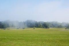 Campo verde com névoa da manhã Fotografia de Stock Royalty Free