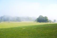 Campo verde com névoa da manhã Imagem de Stock