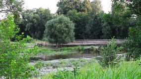 Campo verde com rio video estoque