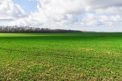 Campo verde com um céu nebuloso Imagens de Stock Royalty Free