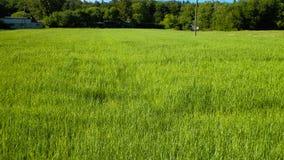 Campo verde como fondo de la naturaleza Imagen de archivo libre de regalías