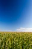 Campo verde con cielo blu Immagine Stock Libera da Diritti