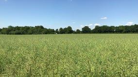 Campo verde con cielo blu ed alcune nuvole con condurre le automobili nel fondo video d archivio