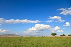 Campo verde con cielo blu, Turchia Fotografia Stock Libera da Diritti