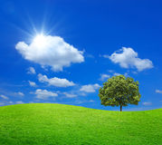 Campo verde con el árbol grande y el cielo azul Fotografía de archivo