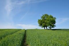Campo verde con el árbol solitario Fotos de archivo libres de regalías
