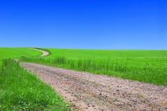 Campo verde con el camino y el cielo azul. Fotografía de archivo