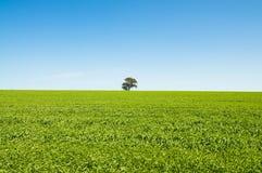 Campo verde con el cielo azul Imagen de archivo libre de regalías