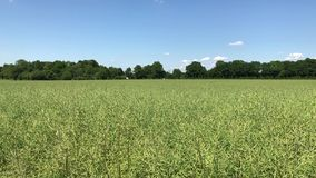 Campo verde con el cielo azul y algunas nubes con la conducci?n de los coches en fondo fotografía de archivo libre de regalías