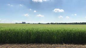 Campo verde con el cielo azul y algunas nubes con la conducci?n de los coches en fondo metrajes