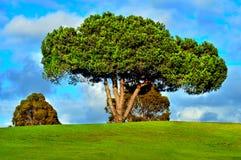 Campo verde con gli alberi Fotografia Stock Libera da Diritti