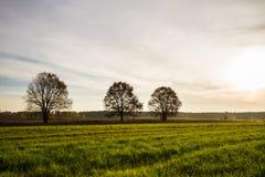 Campo verde con gli alberi Fotografia Stock