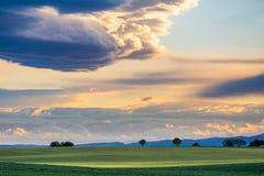 Campo verde con gli alberi al tramonto in Provenza Fotografie Stock