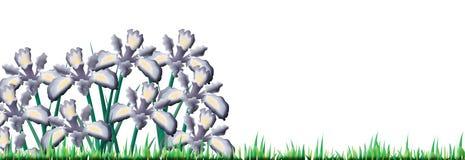 Campo verde con i fiori dell'iride Immagini Stock