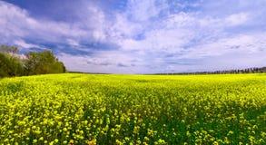 Campo verde con i fiori ed il cielo blu gialli immagine stock libera da diritti