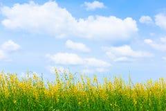 Campo verde con i fiori gialli nell'ambito delle nuvole e della luce luminose bl Fotografia Stock Libera da Diritti