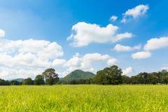 Campo verde con il chiaro fondo della montagna e del cielo Fotografie Stock Libere da Diritti