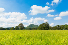 Campo verde con il chiaro fondo della montagna e del cielo Immagini Stock