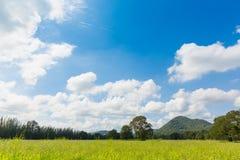 Campo verde con il chiaro fondo della montagna e del cielo Immagine Stock Libera da Diritti