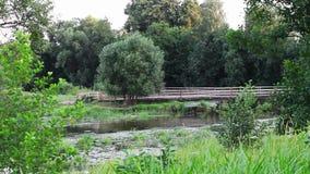 Campo verde con il fiume archivi video