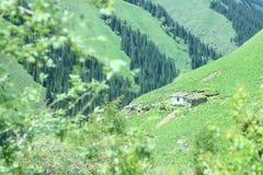 Campo verde con il fondo verde della montagna immagini stock