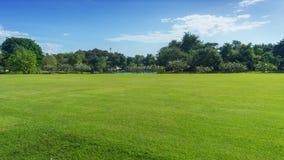 Campo verde con l'albero fotografia stock