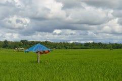 Campo verde con l'ombrello blu in nuvoloso Immagini Stock