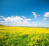 Campo verde con las flores debajo del cielo nublado azul Fotografía de archivo