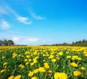 Campo verde con las flores debajo del cielo nublado azul Imagen de archivo libre de regalías