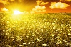 Campo verde con las flores florecientes y el cielo rojo Foto de archivo libre de regalías