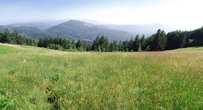 Campo verde con las montañas Imagenes de archivo