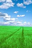 Campo verde con las nubes Imagen de archivo libre de regalías