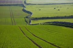 Campo verde in Scozia Fotografia Stock Libera da Diritti