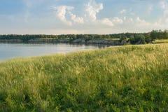 Campo verde con le spighette sulla sponda del fiume Immagine Stock Libera da Diritti