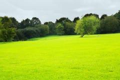 Campo verde con los árboles en el parque Fotografía de archivo libre de regalías