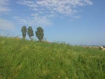 Campo verde con los árboles y el cielo azul Imagen de archivo libre de regalías