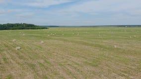 Campo verde con los pajares, visión superior almacen de metraje de vídeo