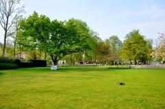 Campo verde con un árbol en el parque de Keukenhof Imagen de archivo libre de regalías