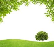 Campo verde con un árbol grande y las hojas del verde Fotos de archivo