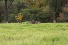 Campo verde con un albero mozzo Fotografia Stock