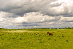 Campo verde con un caballo Imagen de archivo