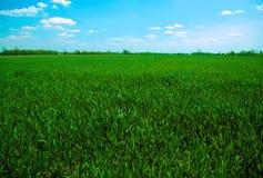 Campo verde contra el cielo azul Imagen de archivo libre de regalías
