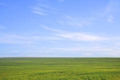 Campo verde contra el cielo azul Imagenes de archivo