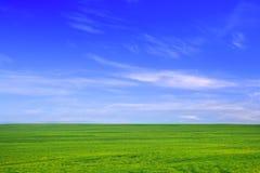 Campo verde contra el cielo azul Fotos de archivo libres de regalías