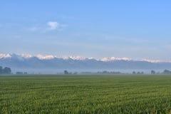 Campo verde contro la foresta nebbiosa e montagne nevose nei precedenti Immagini Stock