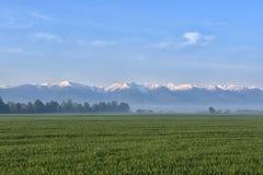 Campo verde contro la foresta nebbiosa e montagne nevose nei precedenti Fotografie Stock
