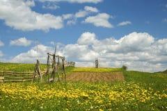 Campo verde da paisagem com dente-de-leão Fotos de Stock Royalty Free